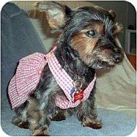 Adopt A Pet :: Princess - Gulfport, FL