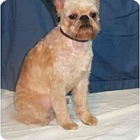 Adopt A Pet :: GOMEZ - Rossford, OH