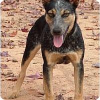 Adopt A Pet :: Rain - Siler City, NC