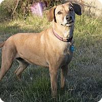 Adopt A Pet :: QUEENIE - Phoenix, AZ