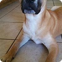 Adopt A Pet :: Jordan - Grass Valley, CA