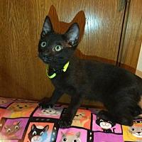 Adopt A Pet :: A-Eddie - Tyler, TX