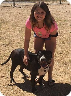American Staffordshire Terrier Dog for adoption in Wickenburg, Arizona - Princess Nena