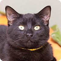 Adopt A Pet :: Sable - Fargo, ND