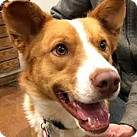 Adopt A Pet :: Wyatt-ADOPTION PENDING - Boulder, CO