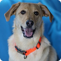 Adopt A Pet :: Chase - Minneapolis, MN