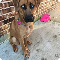 Adopt A Pet :: Skye - Dallas, TX