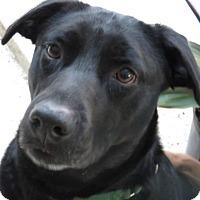 Adopt A Pet :: Mandy!  Affectionate! - St Petersburg, FL