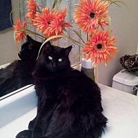 Adopt A Pet :: JASPER 4 - Chandler, AZ