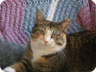 Domestic Shorthair Cat for adoption in Fairborn, Ohio - Bits