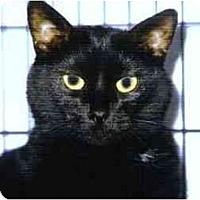 Adopt A Pet :: Ebony - Medway, MA