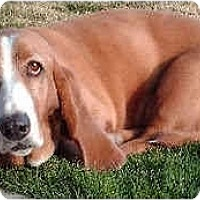 Adopt A Pet :: Vienna - Phoenix, AZ