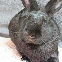 Adopt A Pet :: Bear - Newport, DE