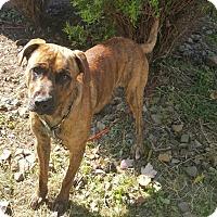 Adopt A Pet :: Waylon - New Middletown, OH