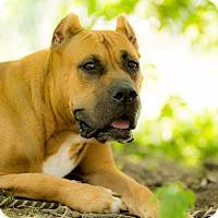 Adopt A Pet :: Jade - Virginia Beach, VA