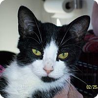 Adopt A Pet :: Gareth - Mexia, TX