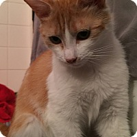 Adopt A Pet :: Hope - Wayne, NJ