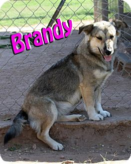 German Shepherd Dog Mix Dog for adoption in Midland, Texas - Brandy