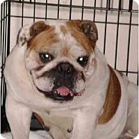 Adopt A Pet :: Ruby - Winder, GA