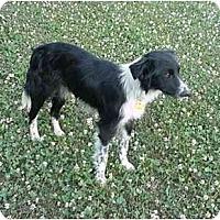 Adopt A Pet :: Grace - Tiffin, OH