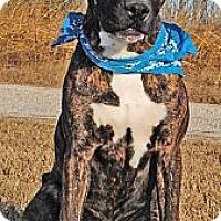 Adopt A Pet :: Murphy - Gonzales, TX