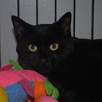 Adopt A Pet :: Nellie - Lafayette, NJ