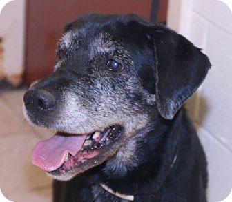 Labrador Retriever Mix Dog for adoption in McDonough, Georgia - Hazel