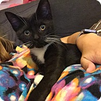 Adopt A Pet :: Tennessee - Plainville, MA