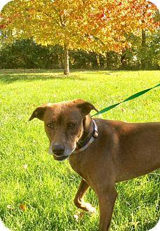 Labrador Retriever Mix Dog for adoption in Albion, New York - Delia