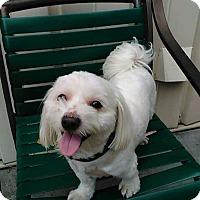 Adopt A Pet :: Buddie - Tavares, FL