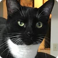 Adopt A Pet :: Piper - O'Fallon, MO