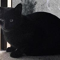 Adopt A Pet :: Burberry (adult female) - Harrisburg, PA