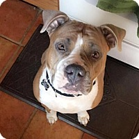 Adopt A Pet :: Nala - Lincoln, CA