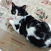 Adopt A Pet :: Tyke - Acme, MI
