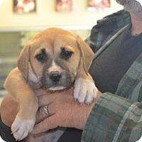 Adopt A Pet :: Tuck - McKinney, TX