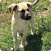 Adopt A Pet :: Lulu - Manchester, NH