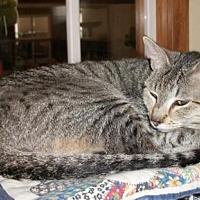 Adopt A Pet :: Valentine - Lacon, IL