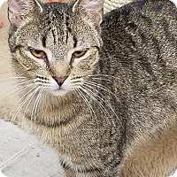 Adopt A Pet :: Emme - Phoenix, AZ