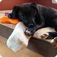 Adopt A Pet :: Betty Boots - Homewood, AL