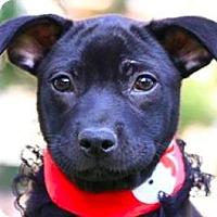 Adopt A Pet :: Joyce - San Ramon, CA