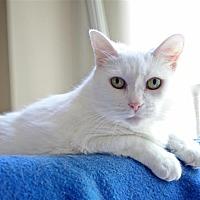 Adopt A Pet :: Kailee - Fairfax Station, VA