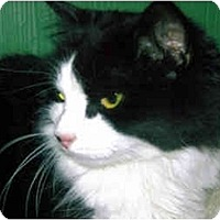Adopt A Pet :: Jessica - Medway, MA