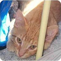 Adopt A Pet :: Seabs - Lombard, IL