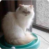 Adopt A Pet :: Jerry - Beverly Hills, CA