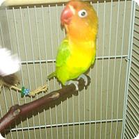 Adopt A Pet :: None - Villa Park, IL