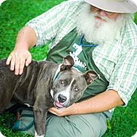 Adopt A Pet :: Heather - pending - Mira Loma, CA