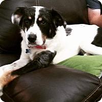 Adopt A Pet :: Zeus - Ogden, UT