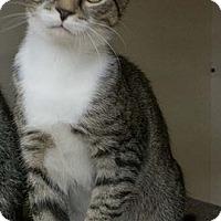 Adopt A Pet :: Crispin - Merrifield, VA
