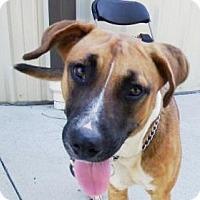 Adopt A Pet :: Lady  $20 - Lincolnton, NC