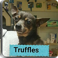 Adopt A Pet :: Truffle - Staley, NC